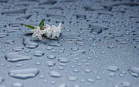 The Rain's Embrace