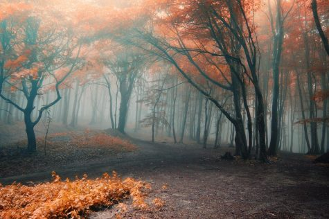 """Foggy Spooky Autumn Forest"" photo courtesy of andreiuc88 under Creative Commons License"