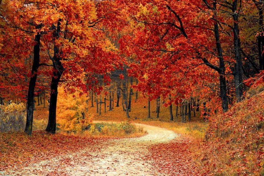 Leaves+Change