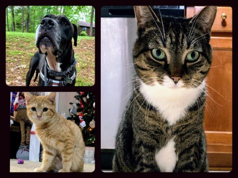 The author showcased her pets with a collage made with Collageable.