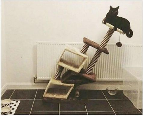 Top 5 Cat Memes That Got Me Through Quarantine